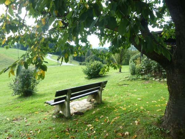 Unter dem Kirschbaum in der Mittags bis Abendsonne