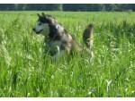 Hundehotel & Hundepension Murtal