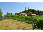 Weinbau Buschenschank Zeck vlg. Reschkeller